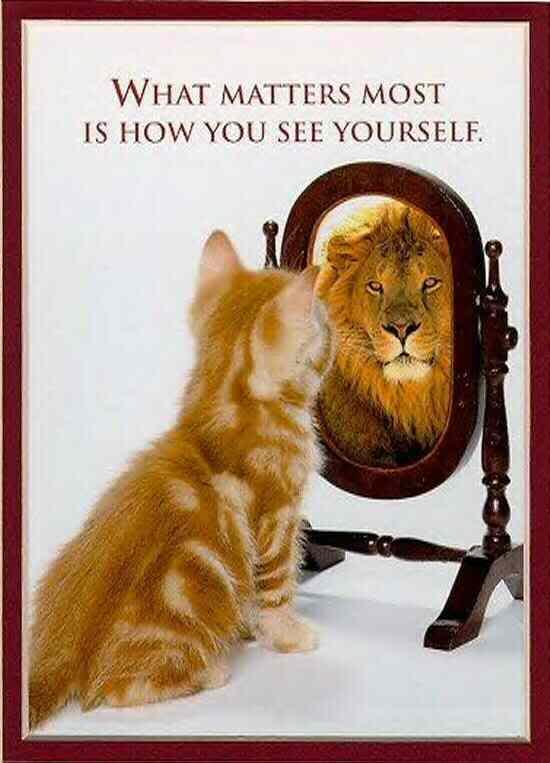 102-1-lion_cat.jpg